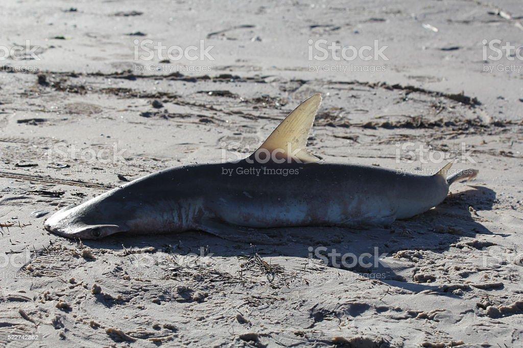 Shark Failure stock photo