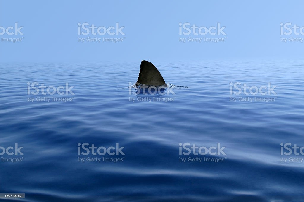 Shark Fin Above Water stock photo