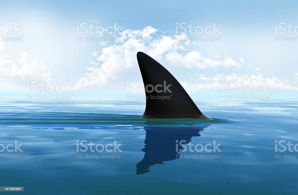 Shark fin above water. XXXL size royalty-free stock photo