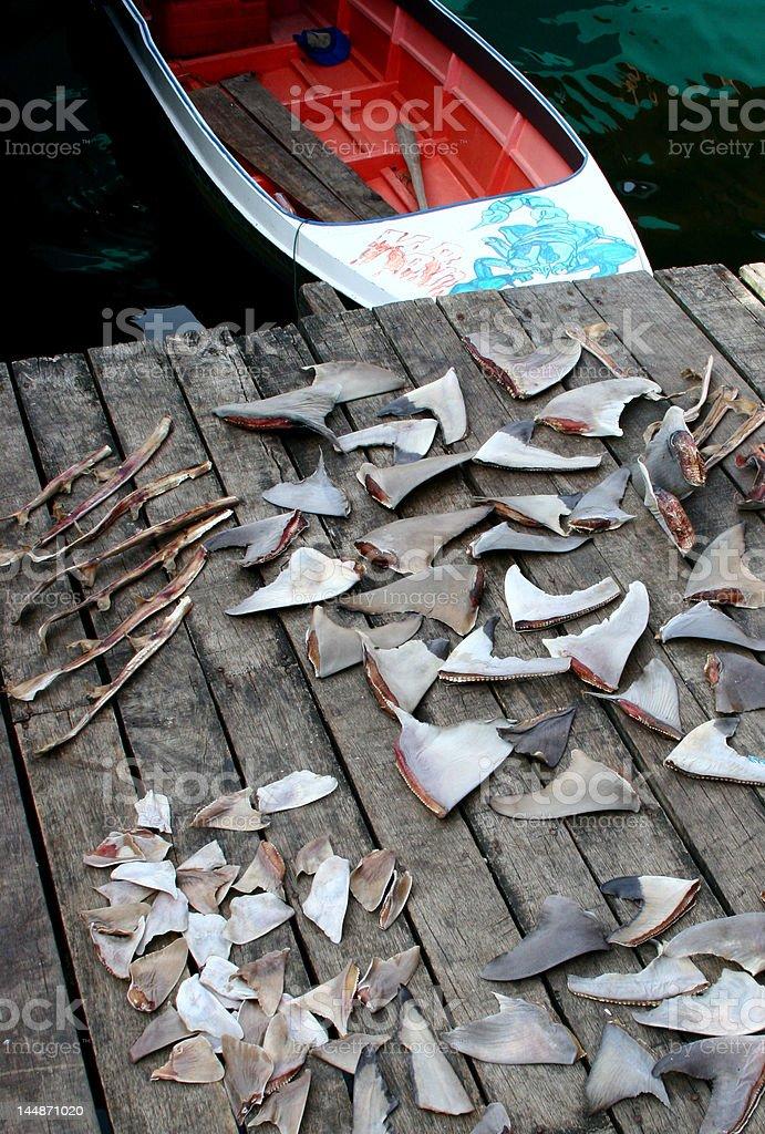 Shark Fins stock photo