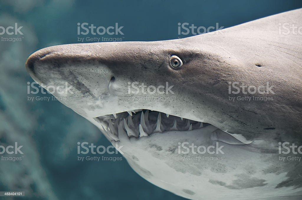 Shark fish stock photo