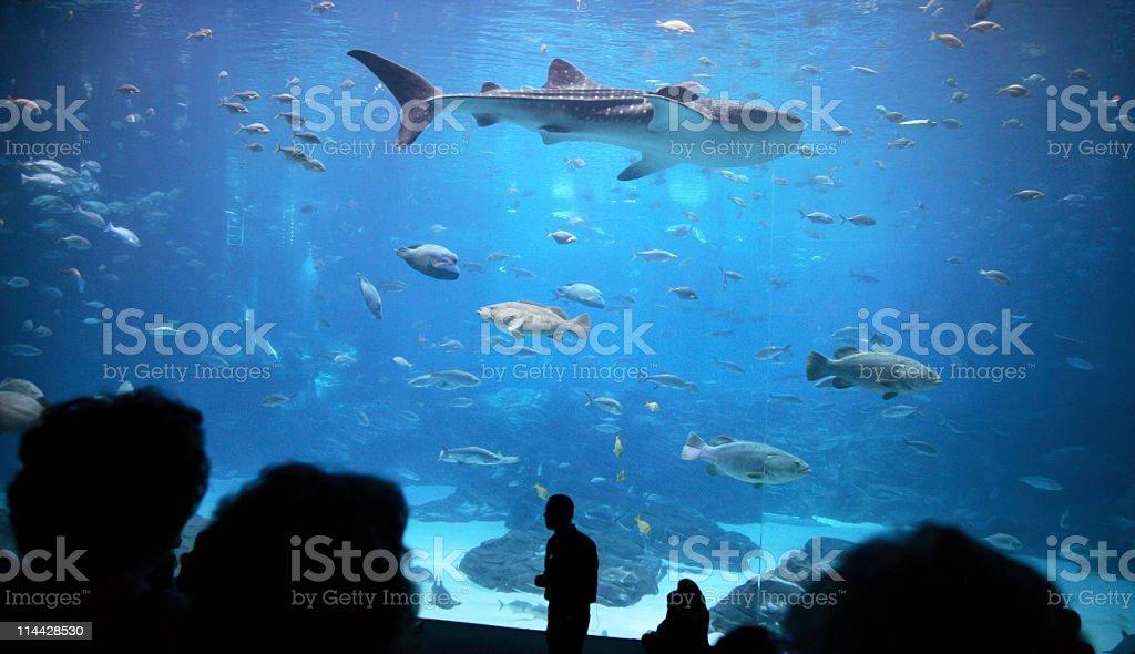 shark in Atlanta's aquarium stock photo