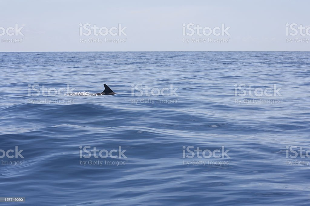 Shark in the water stock photo
