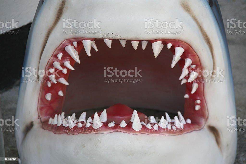 Shark Jaw stock photo