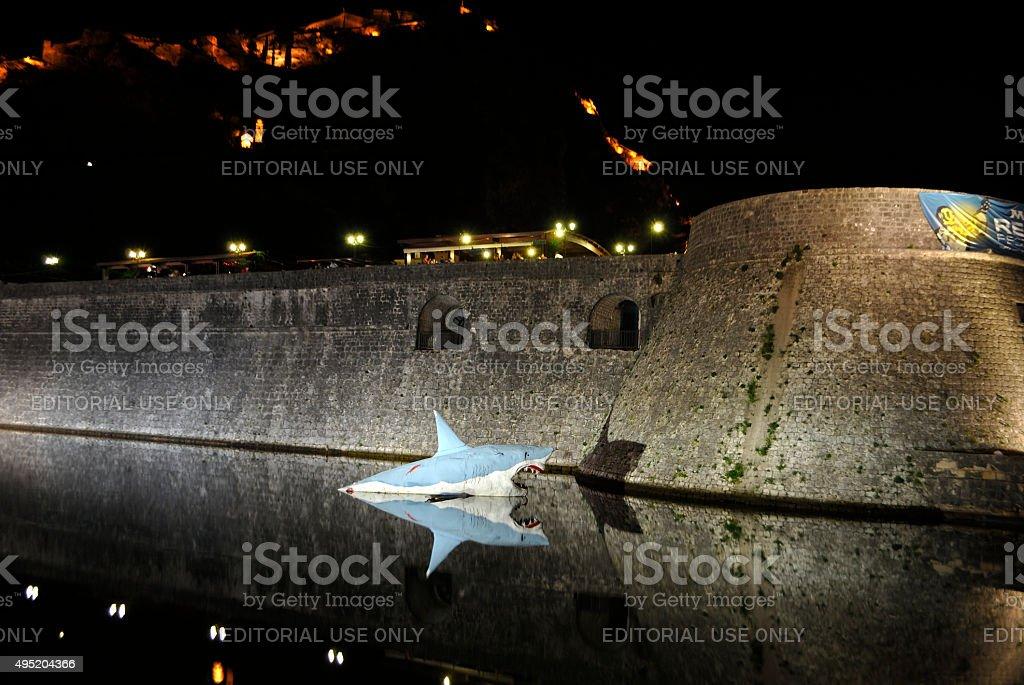 Rekin w pobliżu ściany z stary Kotor. zbiór zdjęć royalty-free