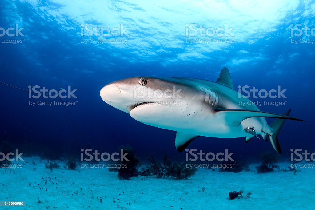 Shark on a dark afternoon stock photo
