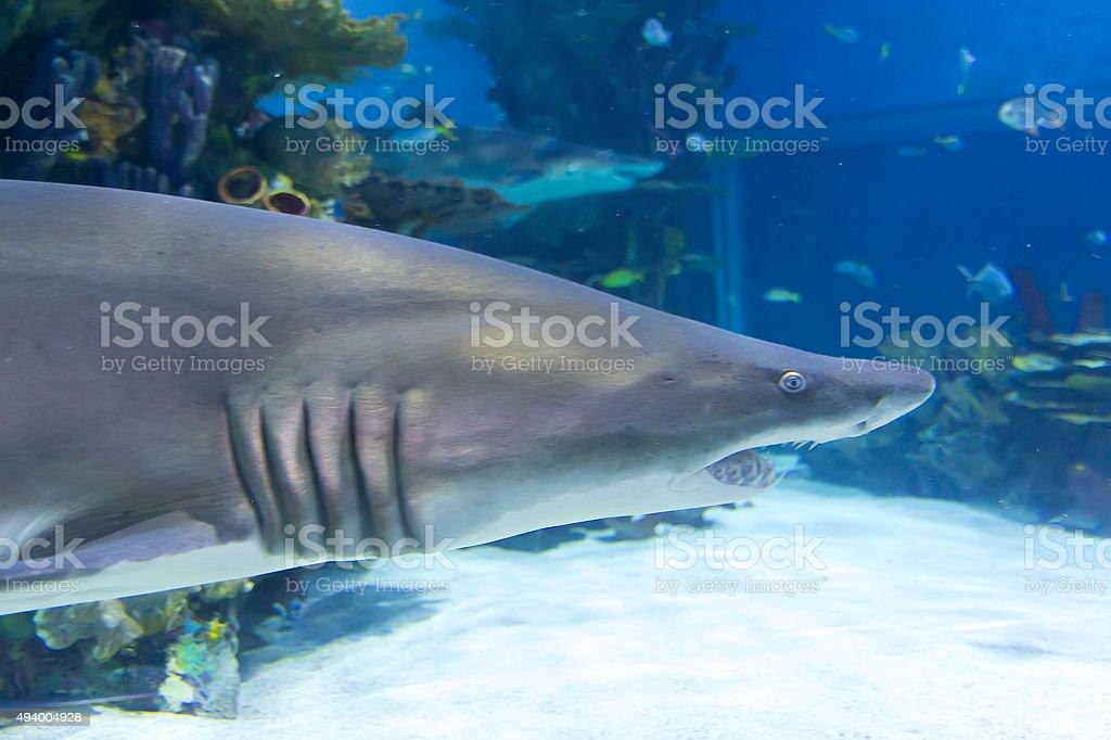 Shark stock photo