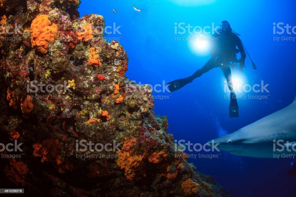 Shark reef stock photo