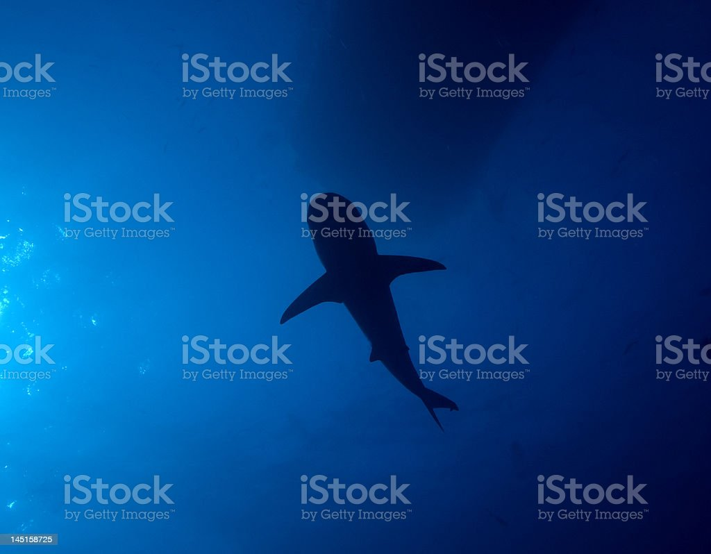 Shark shadow royalty-free stock photo