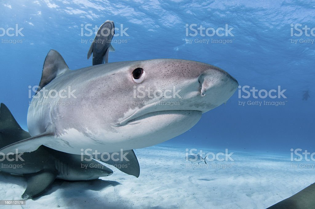 Shark surprise stock photo