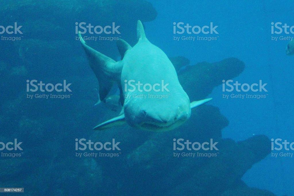 shark swim towards camera stock photo