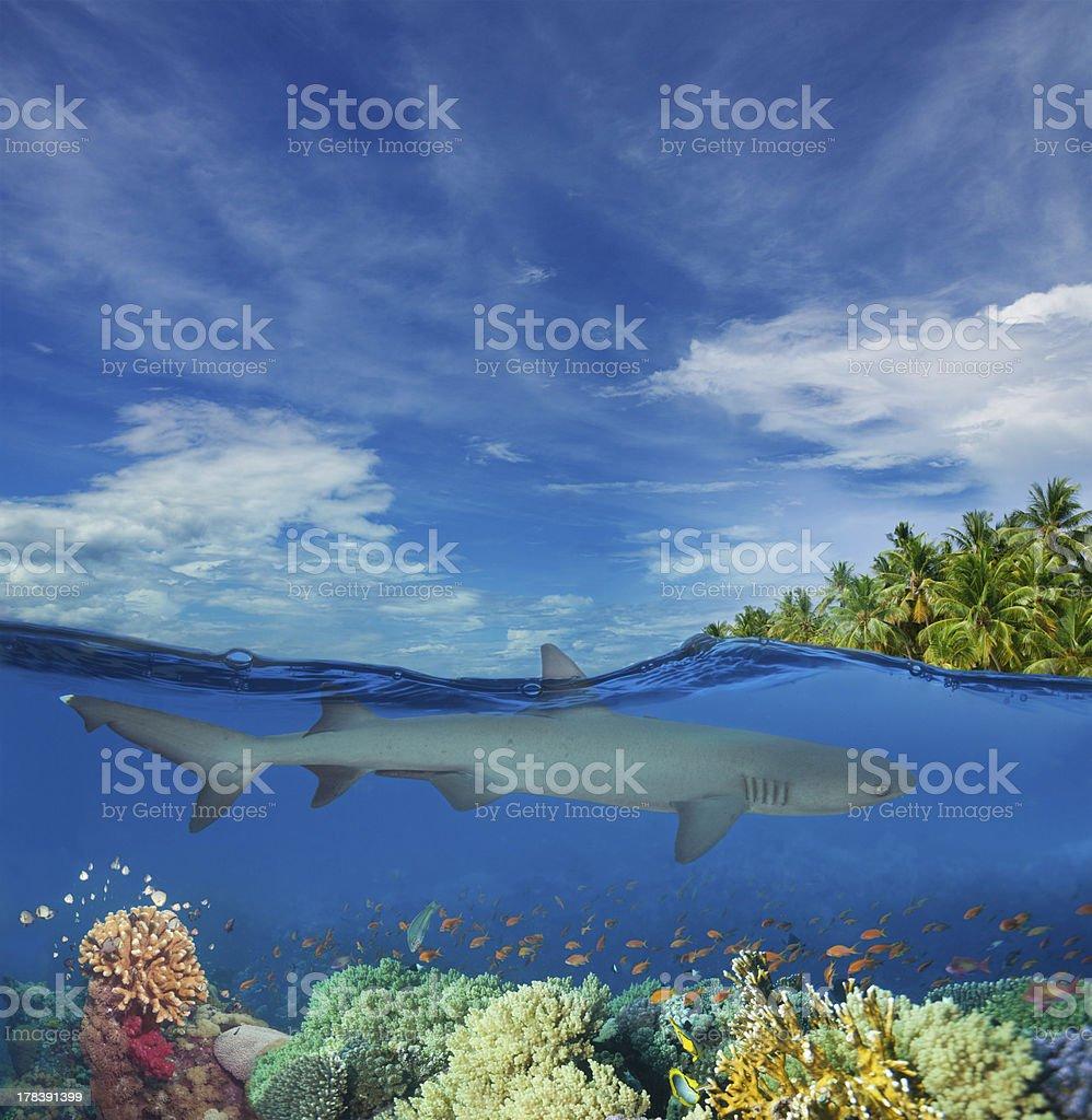 Shark swimming among corals stock photo