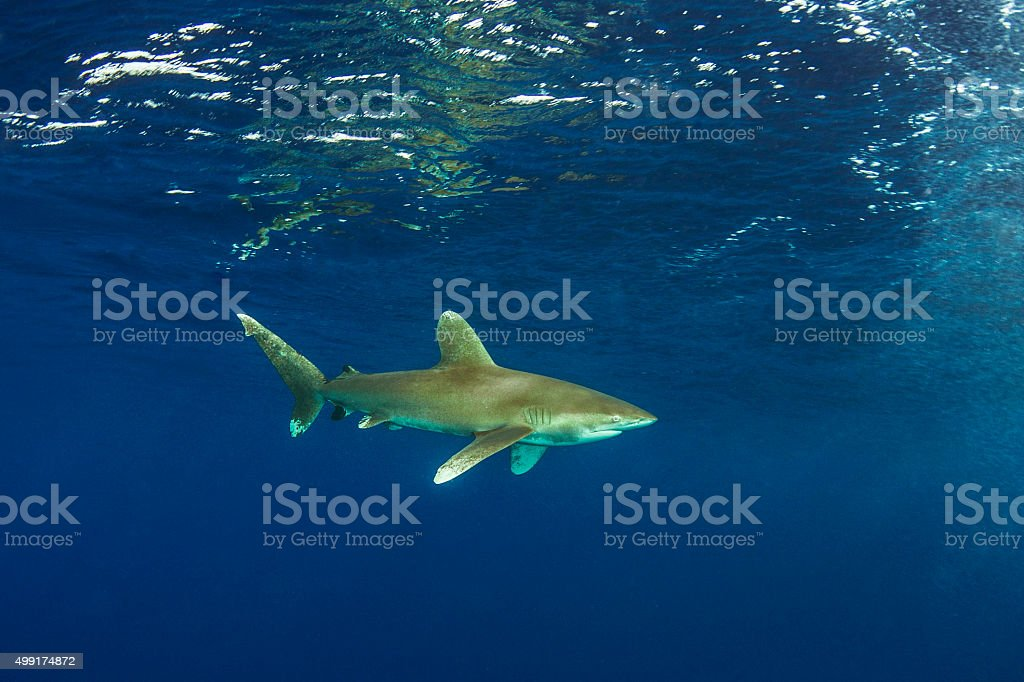 Shark Tail stock photo