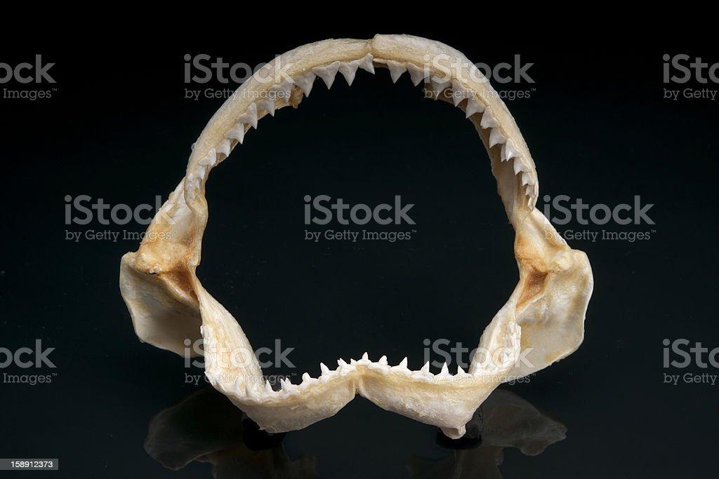 Shark Teeth stock photo