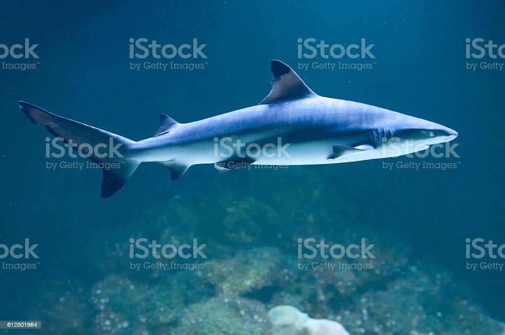 Shark under water stock photo