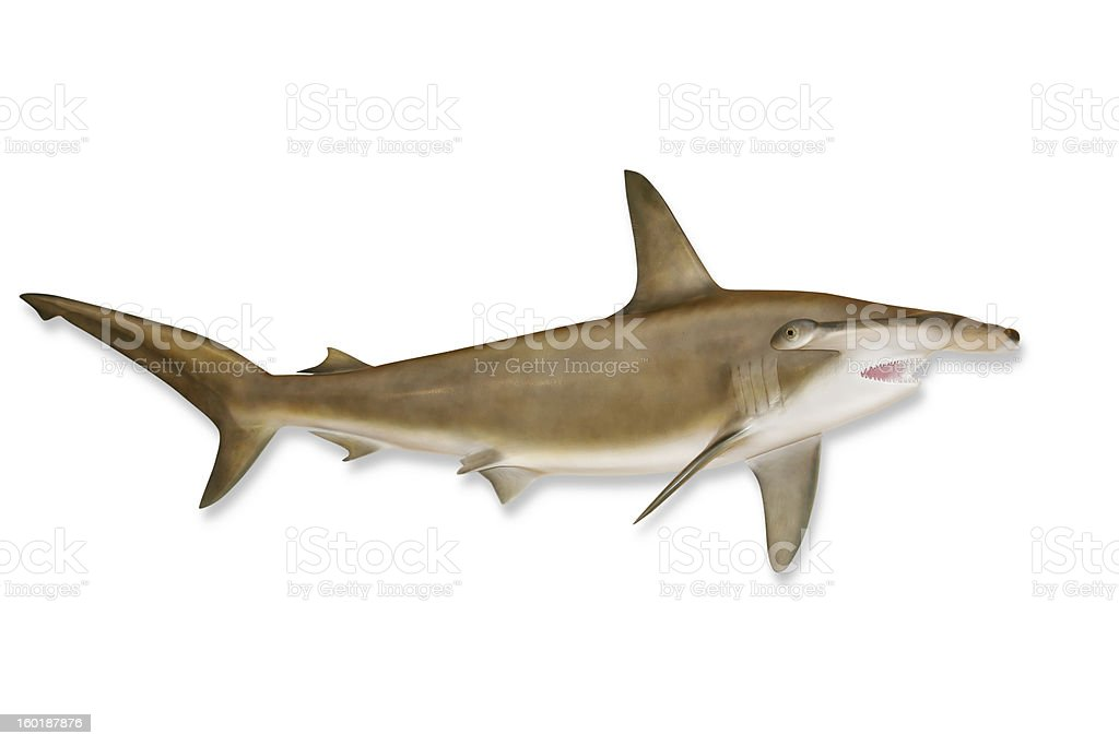 Shark with Clipping Path stock photo