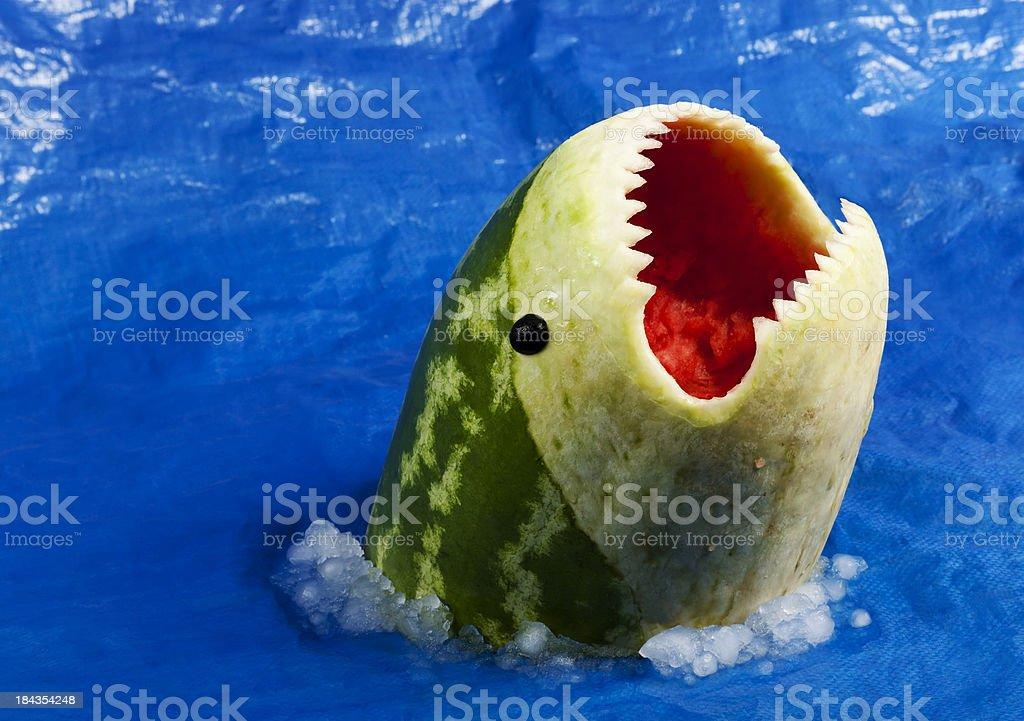 Sharkmelon stock photo