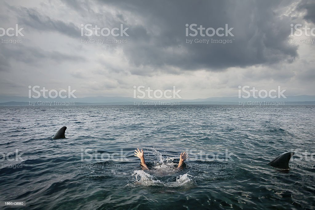 sharks attack stock photo
