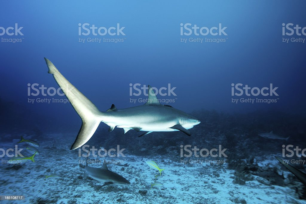 Sharks in the sea stock photo