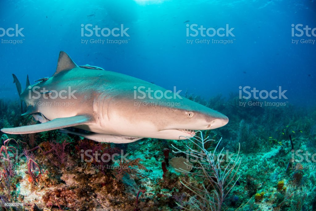 Sharks stock photo