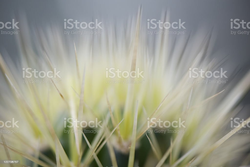 Sharop cactus thorns, macro, selective focus stock photo