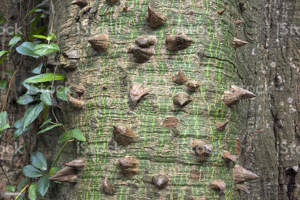 sharp thorns royalty-free stock photo