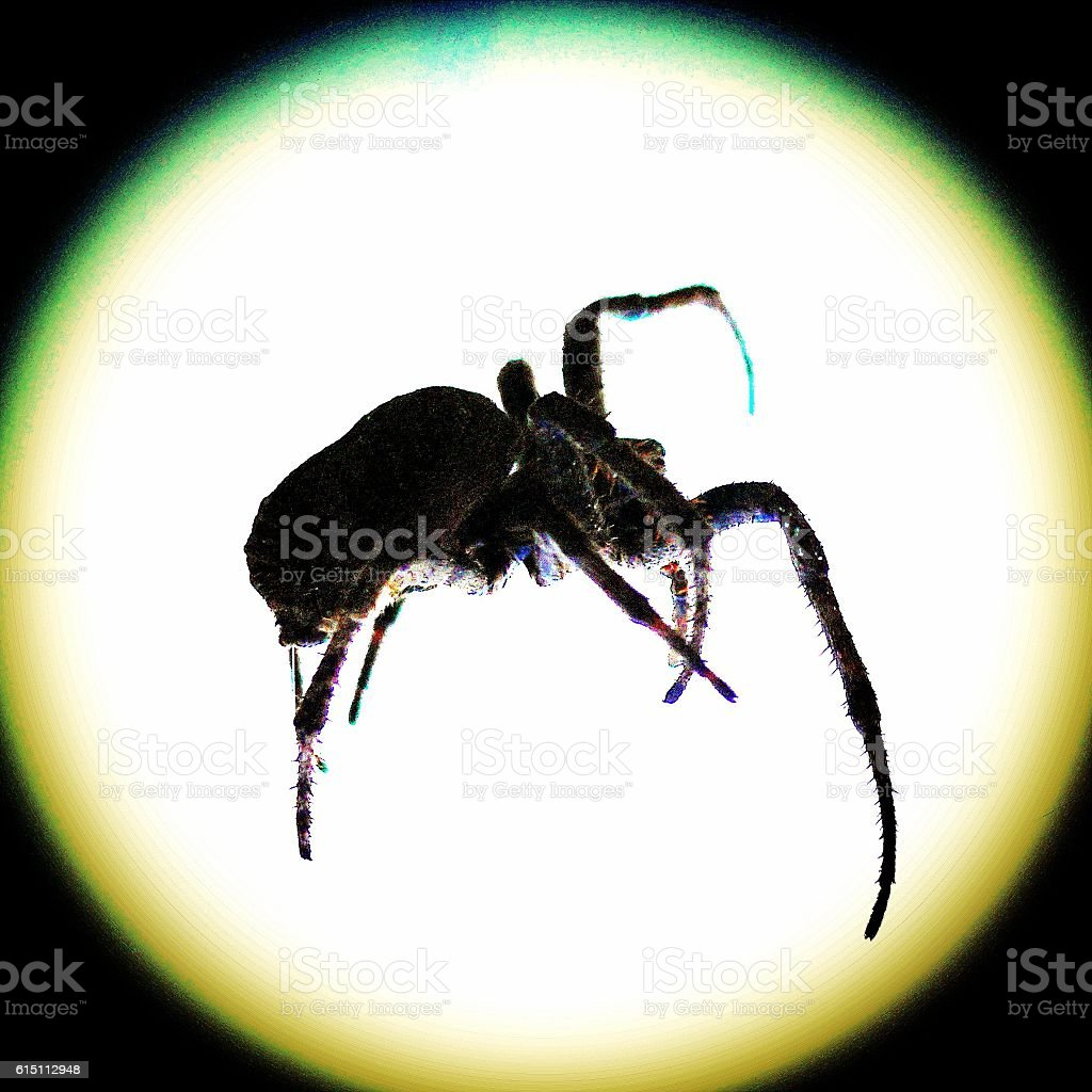 sharpe insects spider stock photo