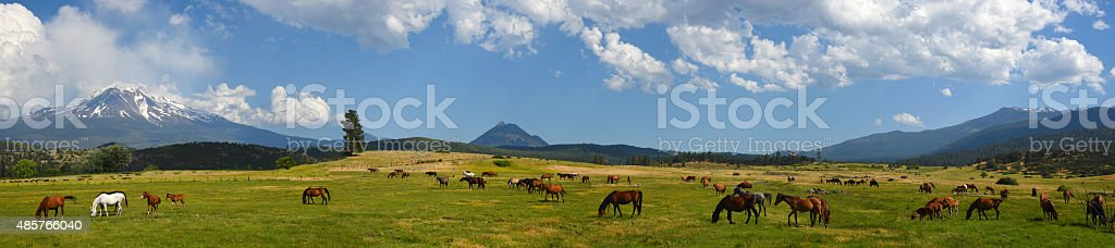 Shasta horses panorama stock photo