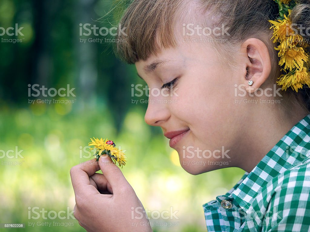 She considers dandelion flower with a ladybug stock photo
