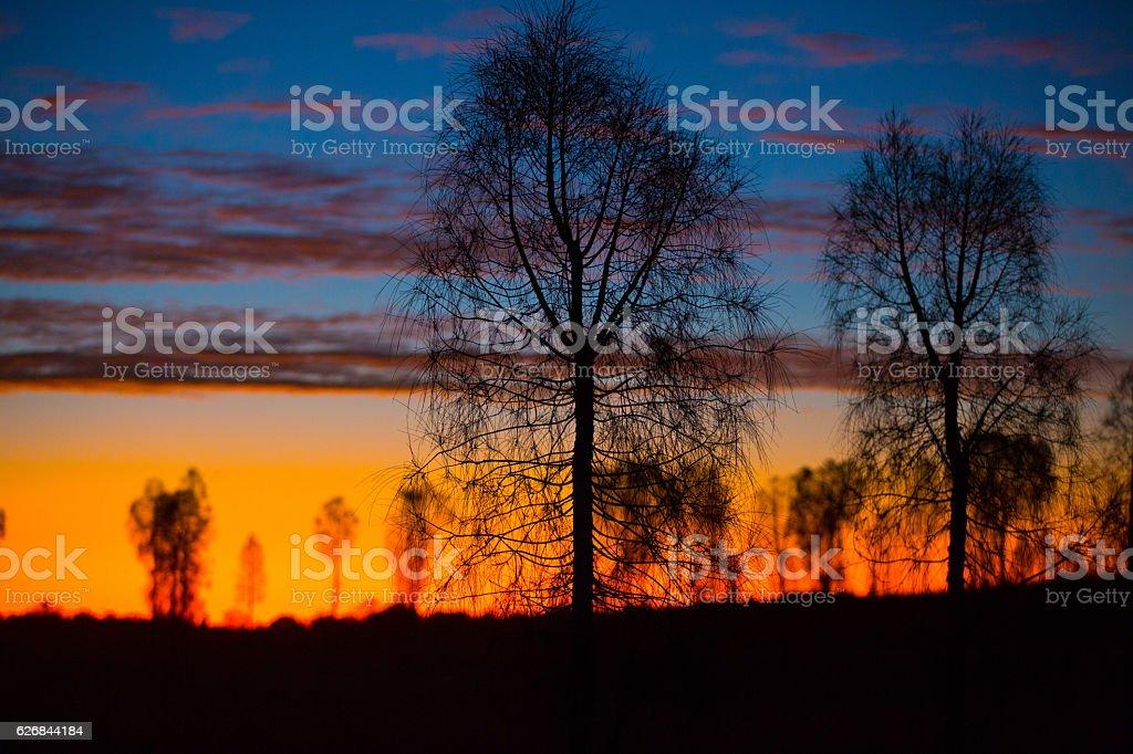 She Oak Sunset stock photo