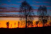 She Oak Sunset