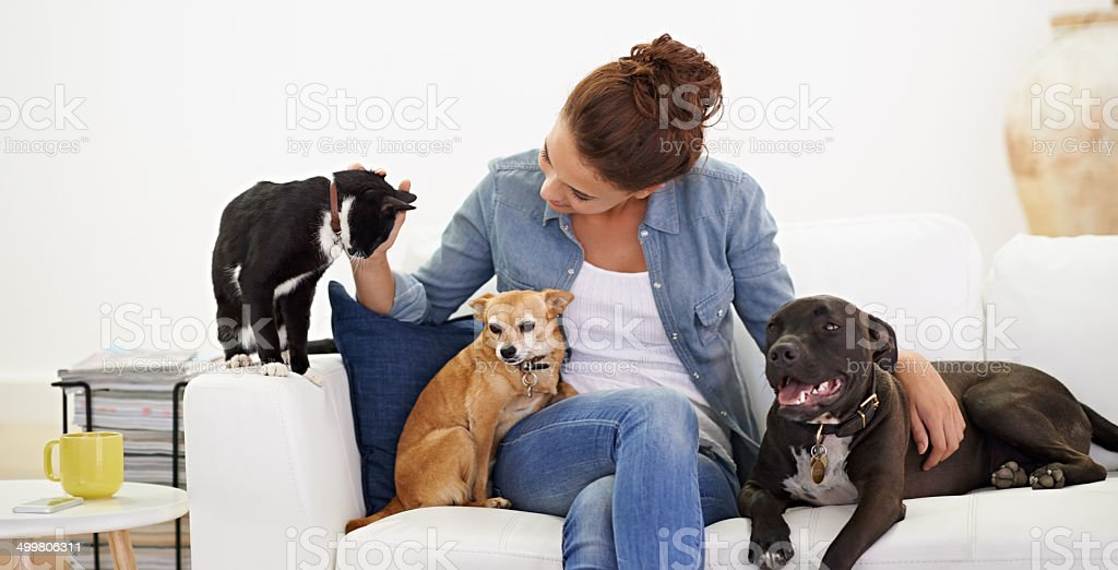She simply loves animals! stock photo