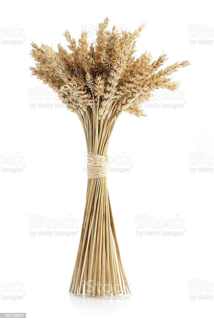 Sheaf of ripe wheat stock photo