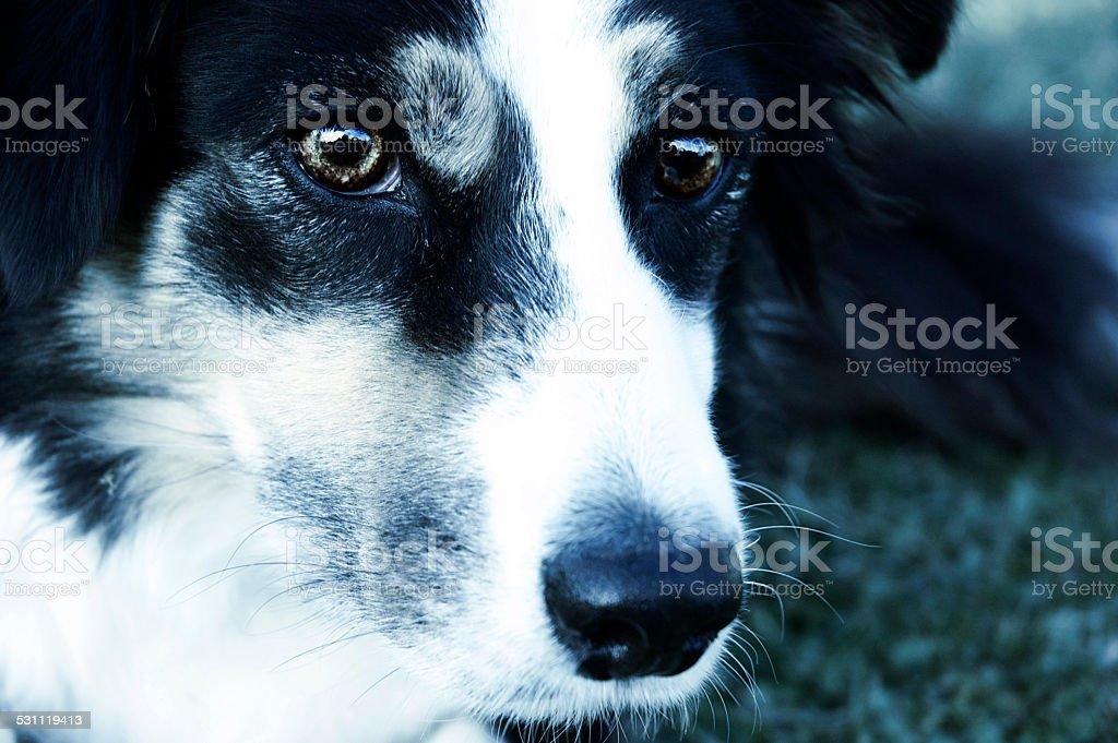 Sheap Dog stock photo