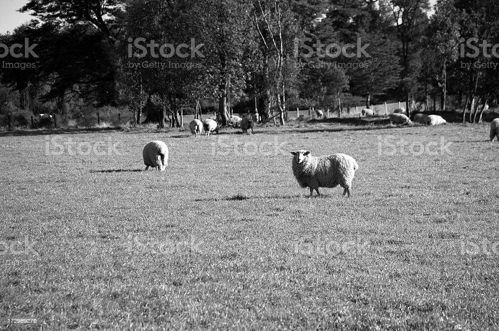 Sheap stock photo
