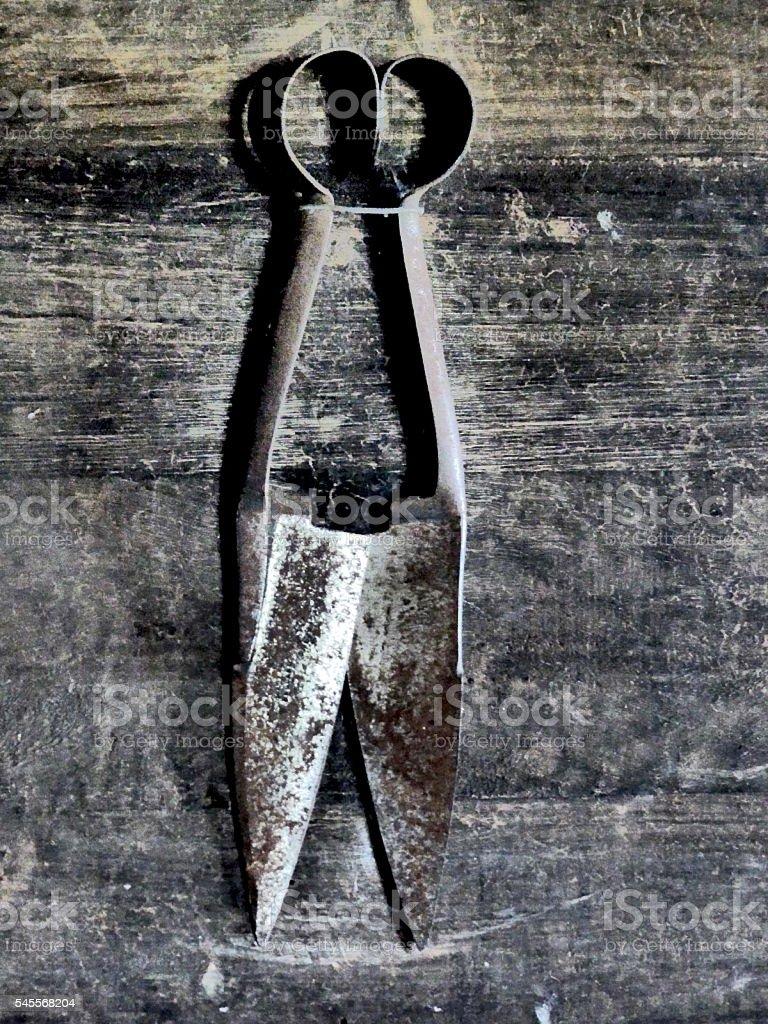 shears stock photo