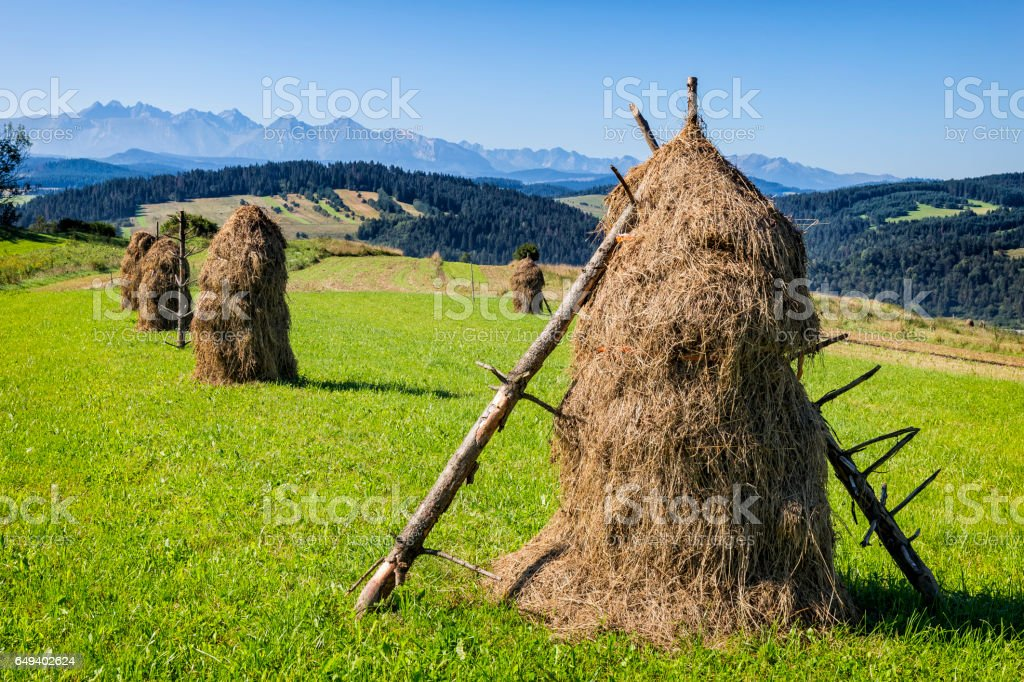 Sheaves  of hay in the field in Podhale region, Poland stock photo