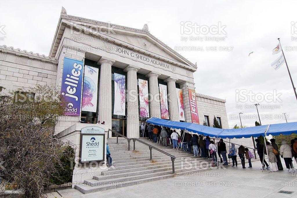 Shedd Aquarium Jellies Exhibit stock photo