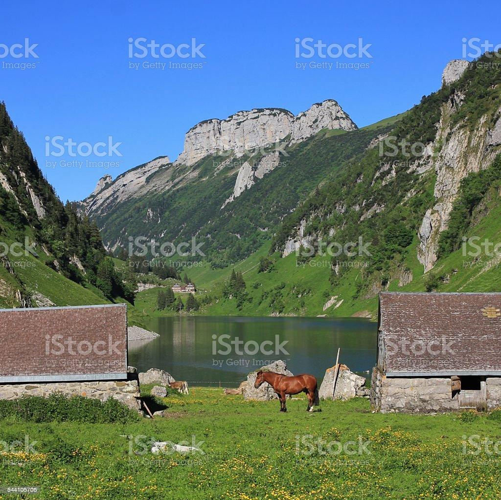 Sheds and horse at lake Fahlensee stock photo