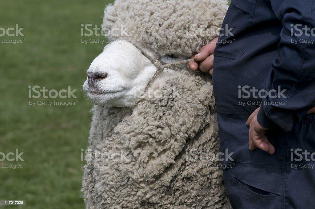 Moutons et farmer photo libre de droits