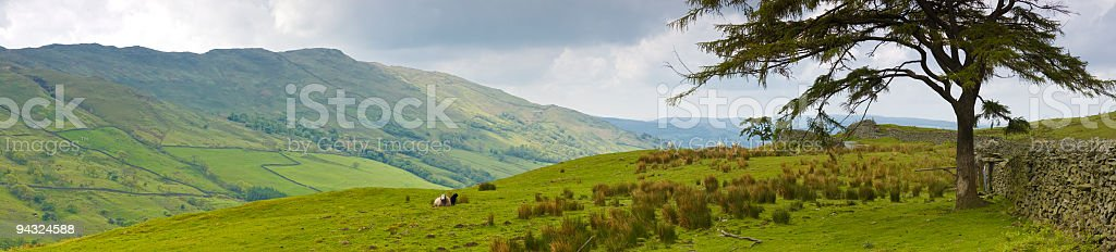 Sheep and high country pasture stock photo