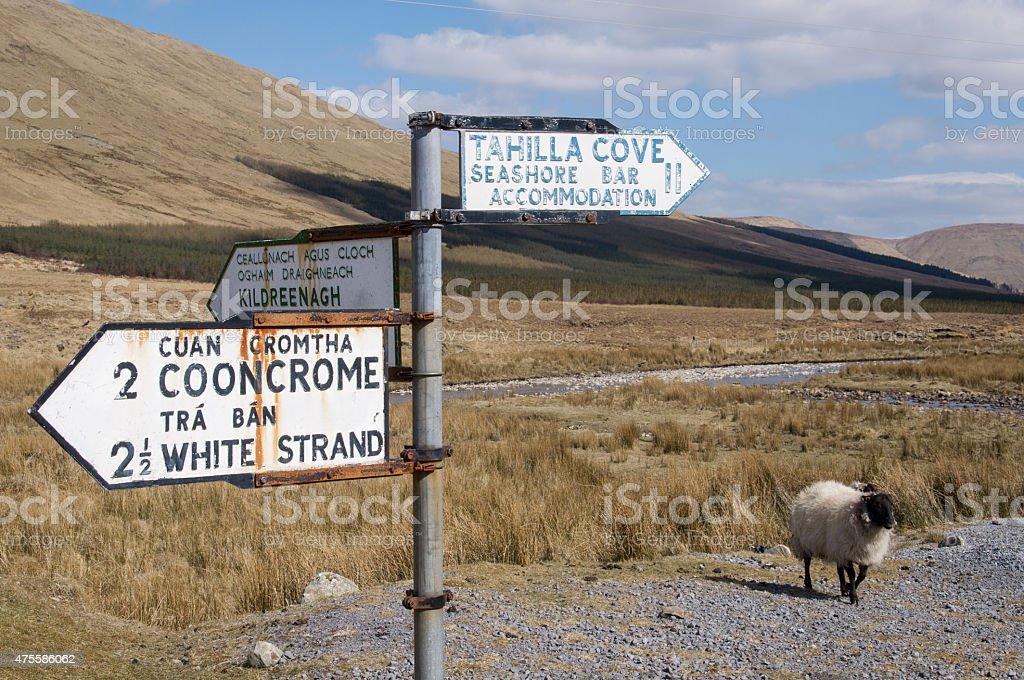Schaf und Wegweiser royalty-free stock photo