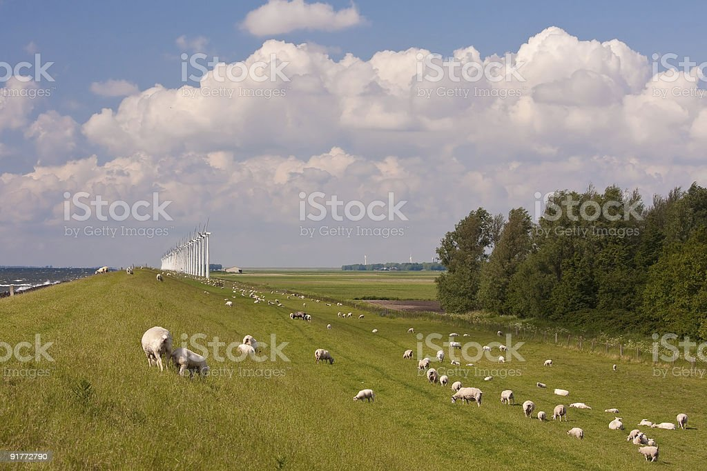 sheep and windmill royalty-free stock photo
