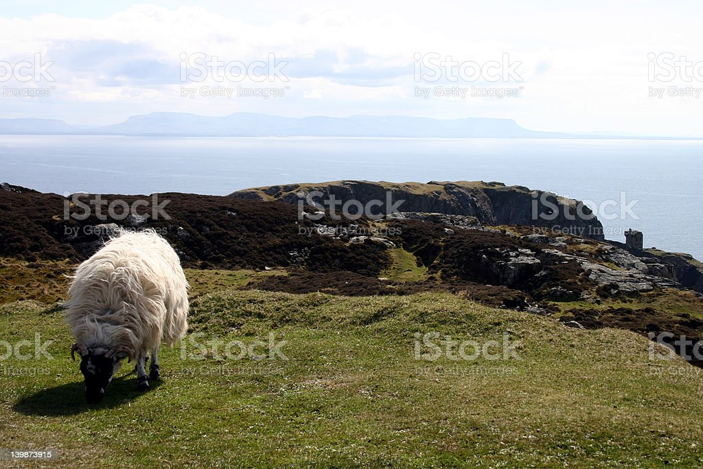 Sheep at Slieve League royalty-free stock photo