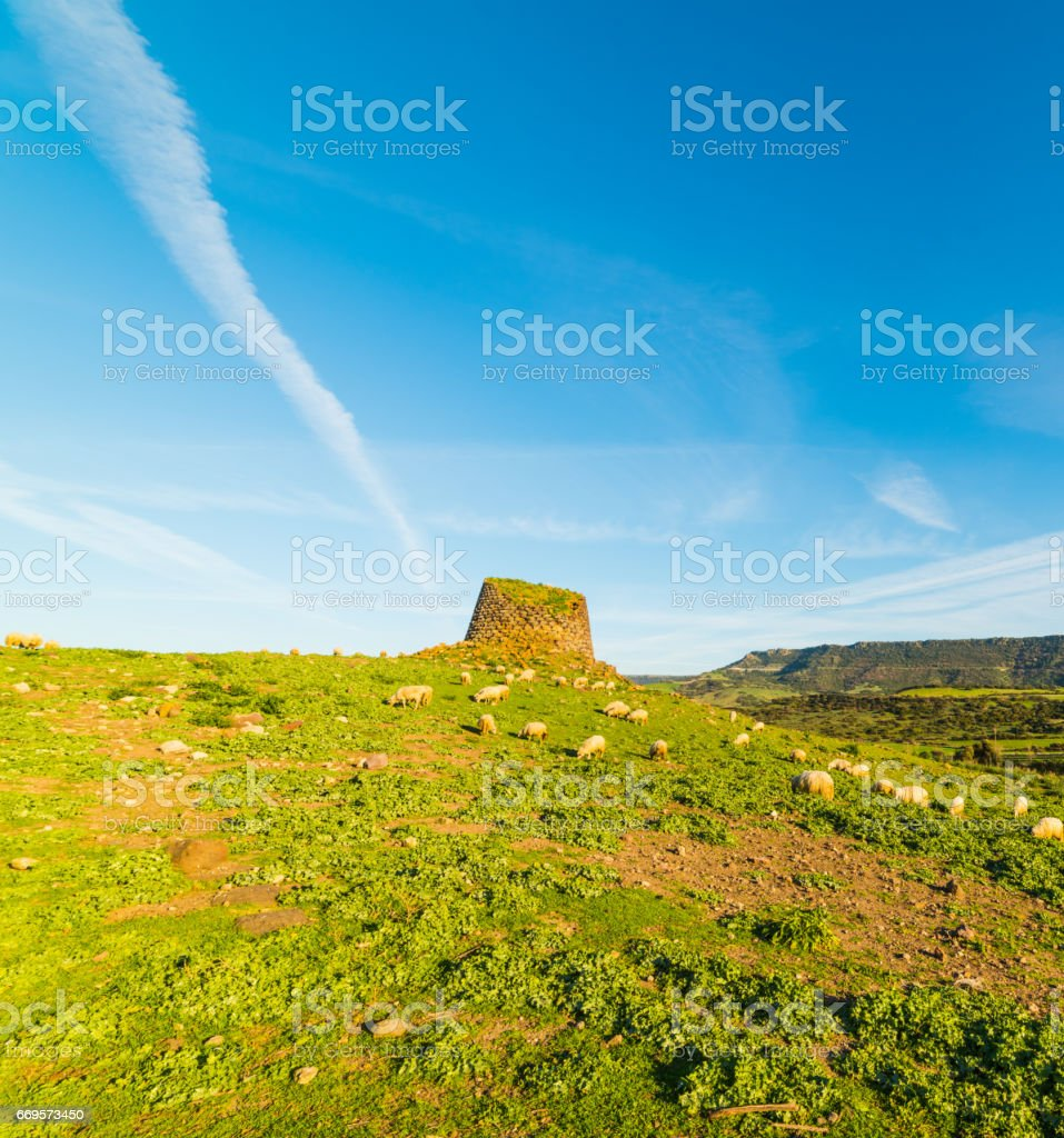 Sheep by a Nuraghe stock photo