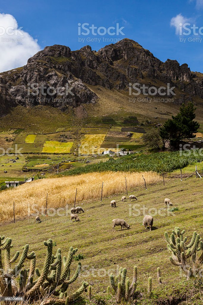 Sheep, colorful crops and rocky peaks near Zumbahua stock photo
