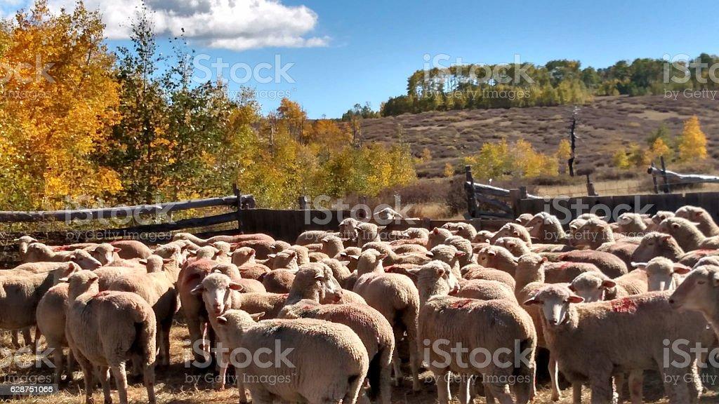 Sheep corral Kolob Plateau Cedar Mountain during Fall Roundup Utah stock photo