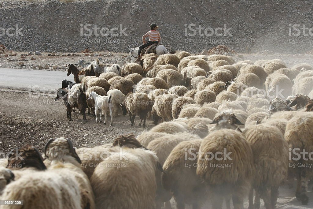 Sheep Country royalty-free stock photo