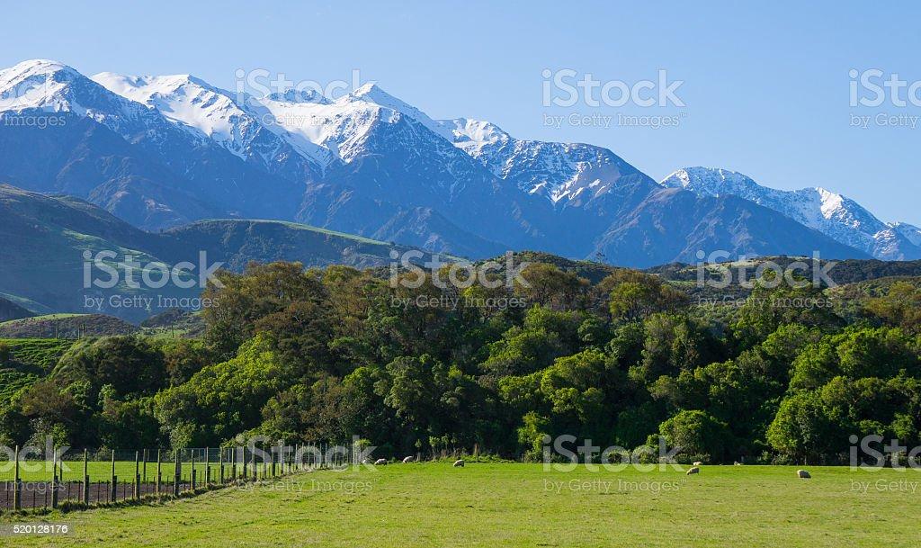Sheep farm with Kaikoura Mountain in the background stock photo