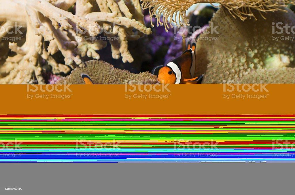 Sheep feed stock photo